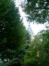 鬱蒼とした緑に隠れる慶應大学図書館