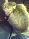 夜の新宿で見かけた猫